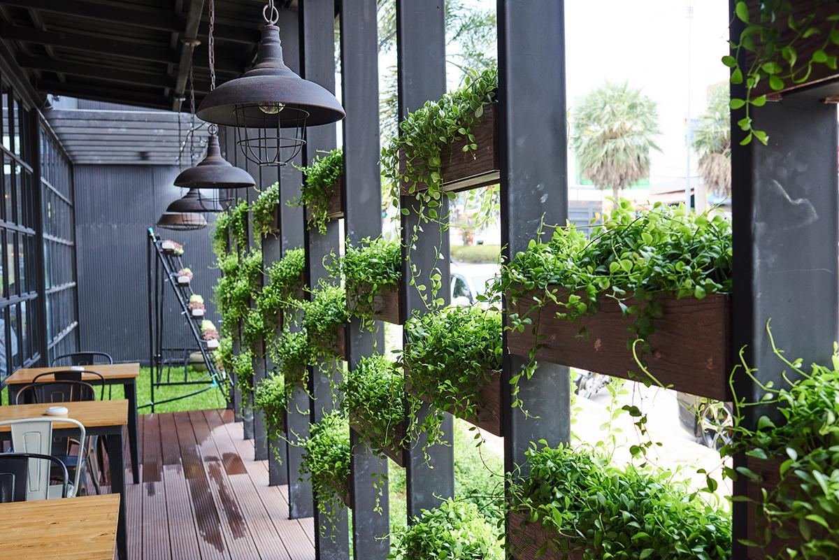 building-plants